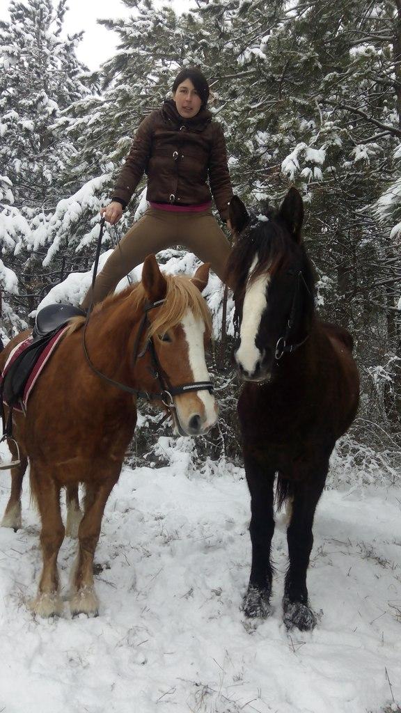 Выступление на конях