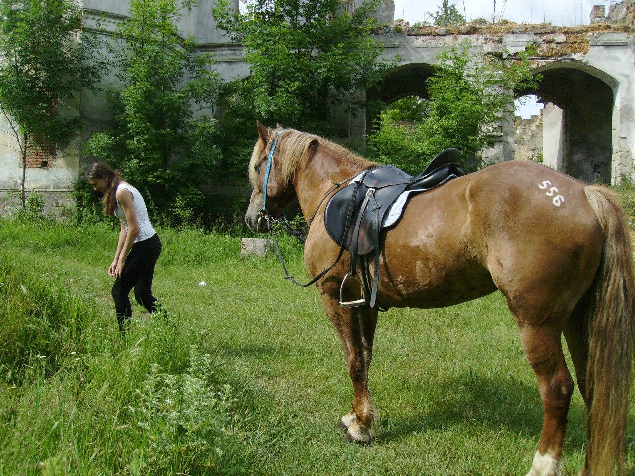 Цены на конные прогулки в Крыму